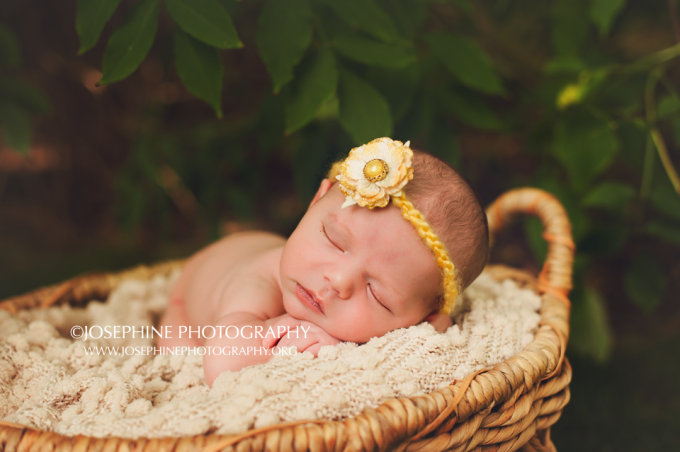 Hamden newborn photographer07